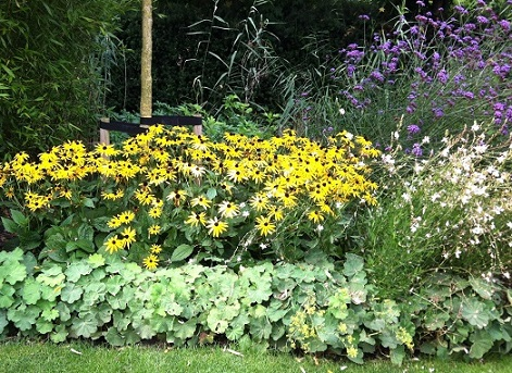 Vaste Planten Tuin : Vaste planten